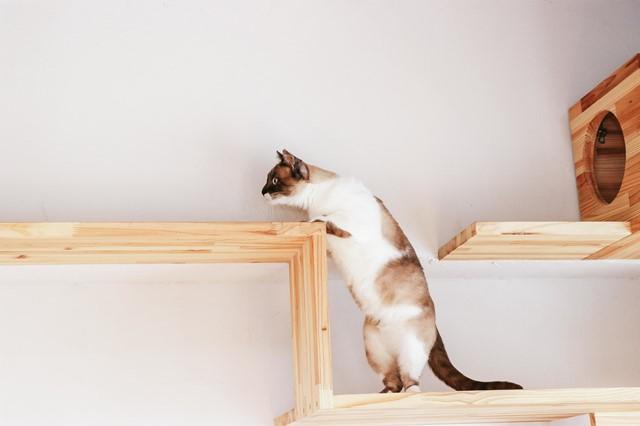 猫好きにはたまらない家|和歌山市むそた不動産売却専門店
